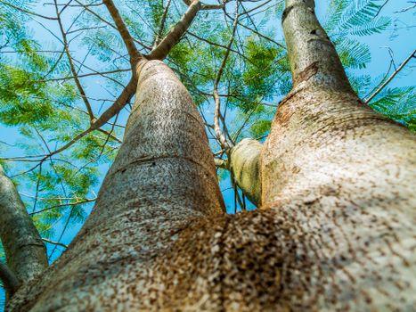 Photo free crust, wildlife, natural environment