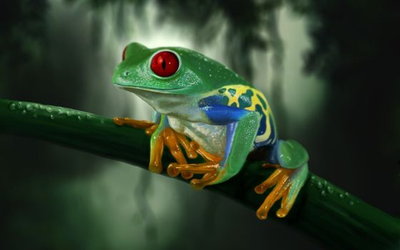 Фото бесплатно лягушка, красные глаза, капли воды