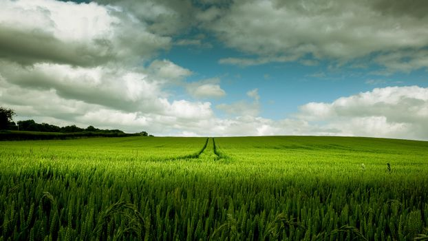 Photo free field, ears, sky