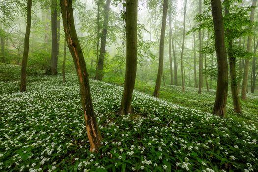 Заставки природа, цветы, утро