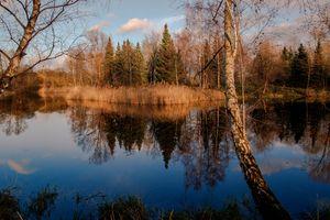 Бесплатные фото озеро,закат солнца,сумерки,деревья,лес,природа,пейзаж