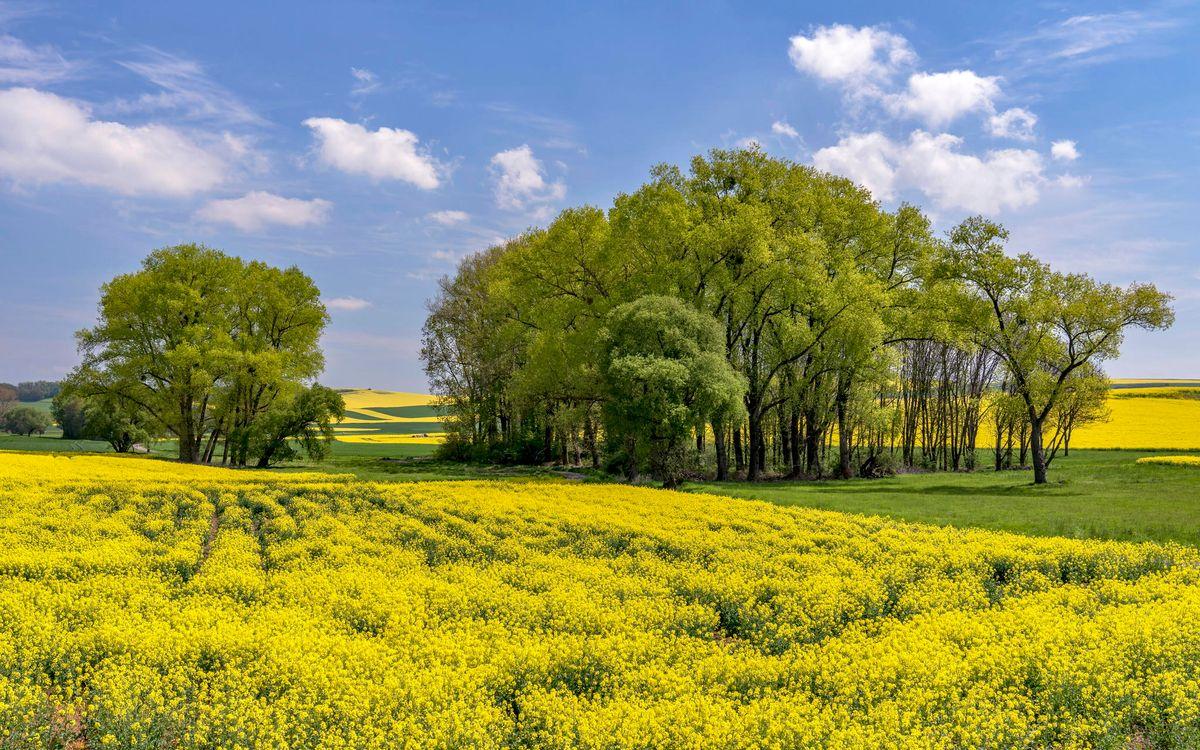 Фото бесплатно поле, цветы, холмы, деревья, пейзаж, пейзажи