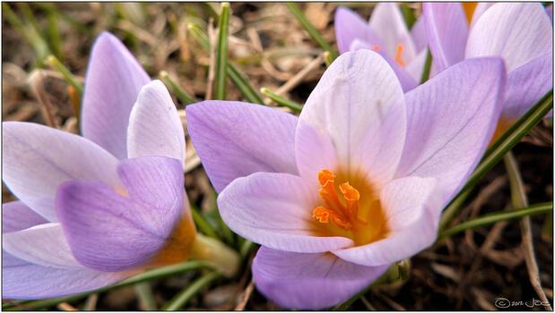 Фото бесплатно растение, pro, глаз