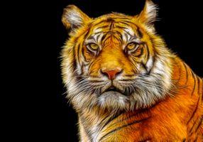 Заставки фотопортрет, тигр, хищник