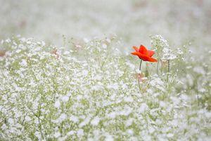Фото бесплатно природа, трава, цветок