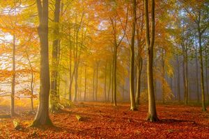 Бесплатные фото осень, лес, деревья, туман, природа, пейзаж