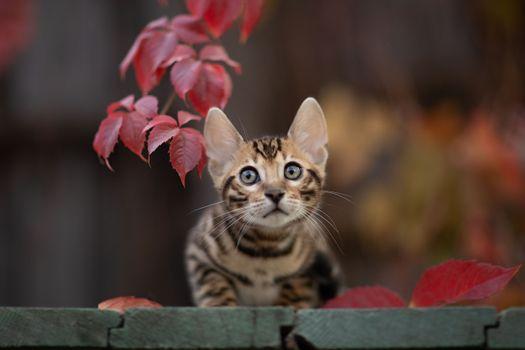 Фото бесплатно милый котёнок, кошки, просмотреть