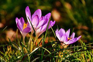 Заставки цветы, цвета, трава
