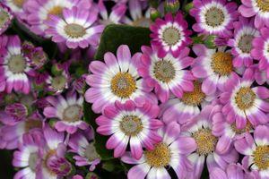 Бесплатные фото красочные,цветы,растения,кустарник