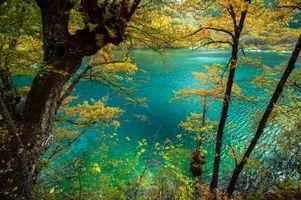 Бесплатные фото осень, озеро, лес, деревья, природа