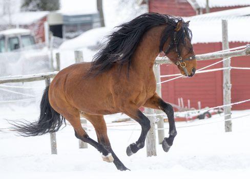 Фото бесплатно зима, снег, каштановая лошадь