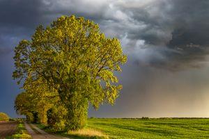 Фото бесплатно закат, поле, туча