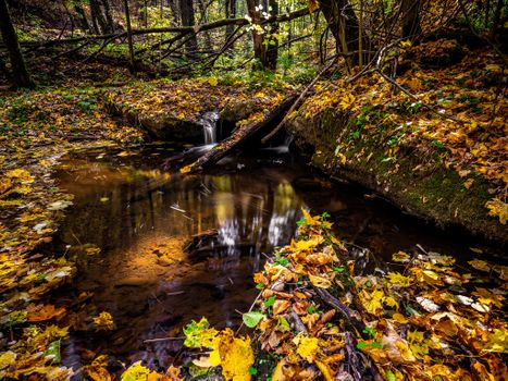 Новое фото на тему лес, осень