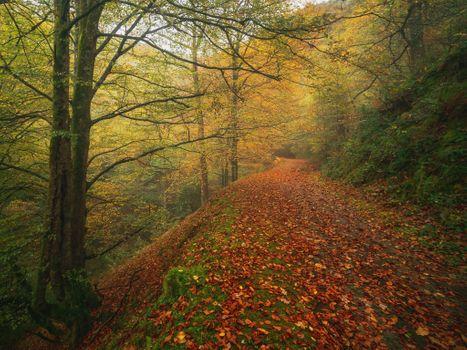 Бесплатно осень, лес фото на телефон