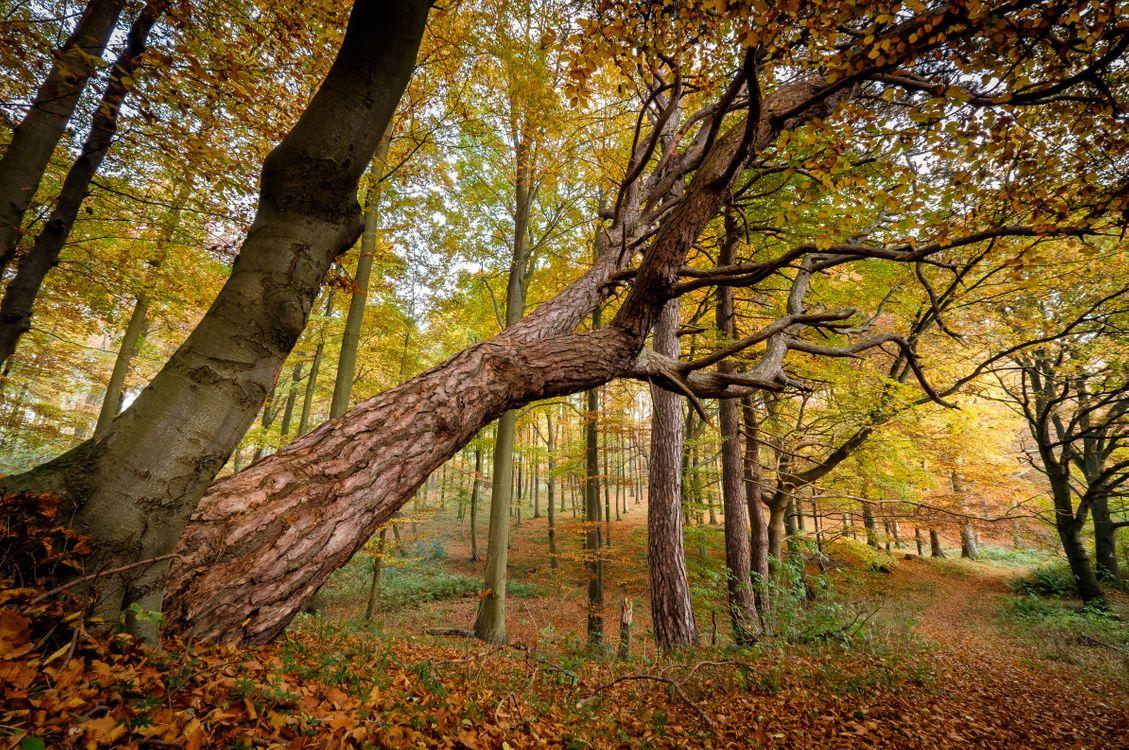 Фото бесплатно цвета осени, деревья, природа - на рабочий стол
