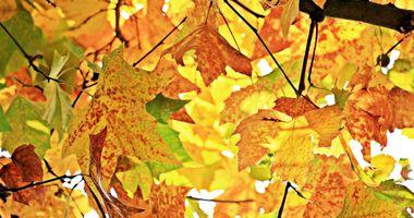 Фото бесплатно наземное растение, осенние цвета, солнечный свет