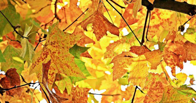Photo free terrestrial plant, autumn colours, sun light
