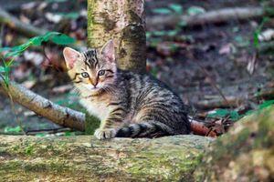Фото бесплатно кошка, ребенок, животное