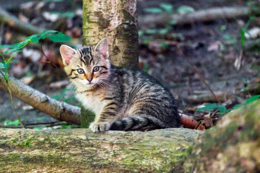 Photo free cat, baby, animal