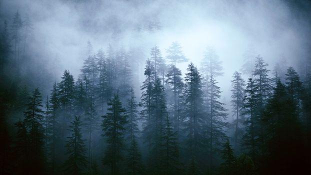 Фото бесплатно туман, деревья, туманный лес
