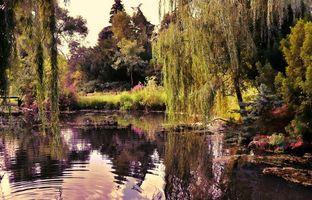 Бесплатные фото озеро, пруд, сад, мост, деревья, пейзаж