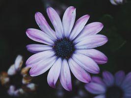 Фото бесплатно лепесток, травянистое растение, фиолетовый