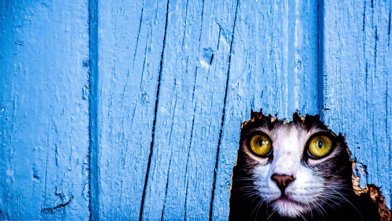 Фото бесплатно кот, кошка, дыра, взгляд, кошки