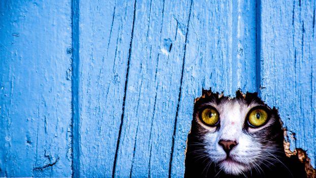 Обои кот,кошка,дыра,взгляд