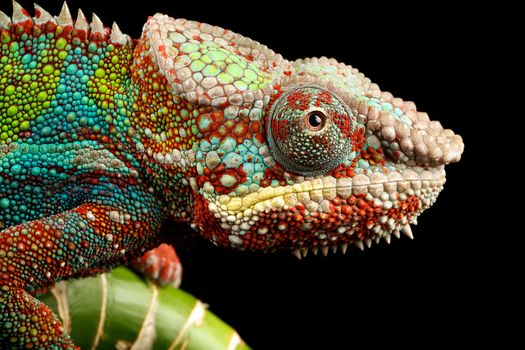 Photo free reptile, look, chameleon
