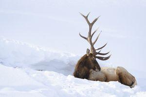 Фото бесплатно снег, природа, животные, олени