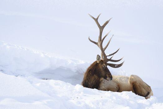 Заставки снег,природа,животные,олени