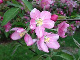 Фото бесплатно яблоко, дерево, природа