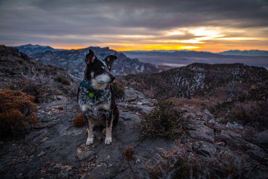 Бесплатные фото закат,восход солнца,силуэт,собака,домашнее животное,Heeler,крупный рогатый скот,синий