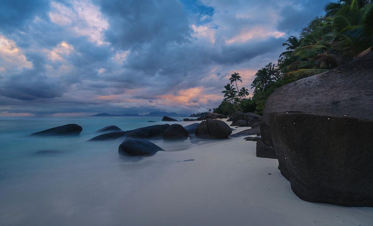 Фото пальмы пейзаж пляж - бесплатные картинки на Fonwall
