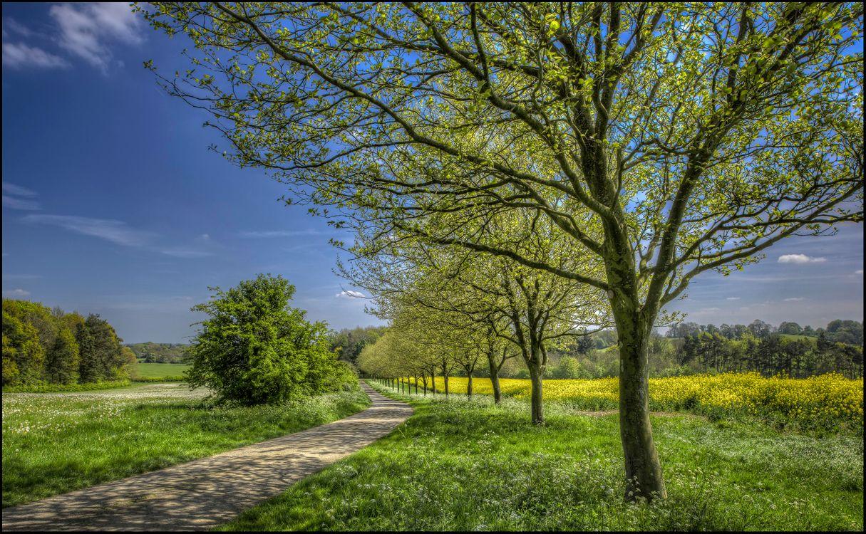 Фото бесплатно весна, цветение, поле, деревья, тропинка, пейзаж, пейзажи