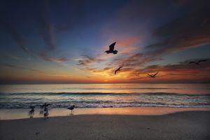 Заставки пляж, птицы, небо