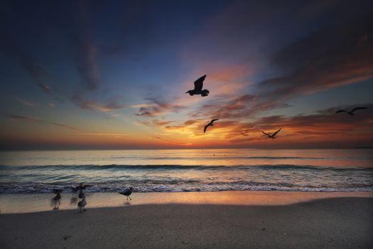 Фото бесплатно Miami, Майами, Флорида, закат, сумерки, море, океан, небо, берег, пляж, волны, птицы