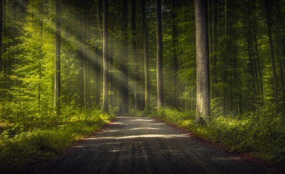 Photo free forest, sunlight, road