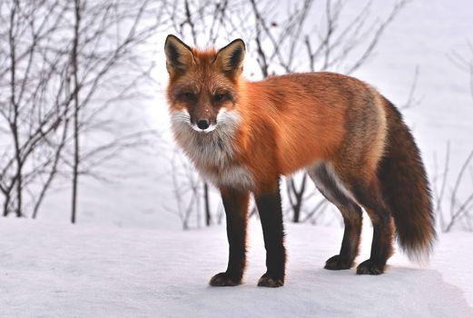 Photo free nature, snow, wildlife