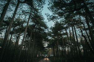 Фото бесплатно trees, road, sky