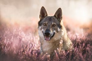 Photo free Wolf, predator, animal
