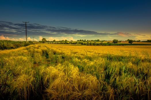 A beautiful screensaver of a sunset, the field