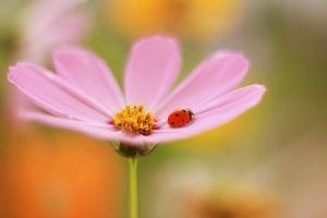 Картинка про цветок, насекомое