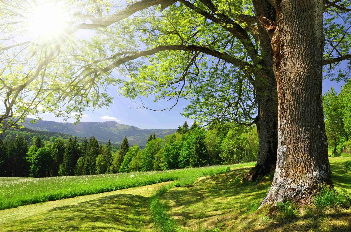 Картинка поле, деревья, лес, солнечные лучи, пейзаж на рабочий стол. Скачать фото обои пейзажи