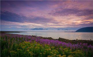 Фото бесплатно закат, цветы, берег