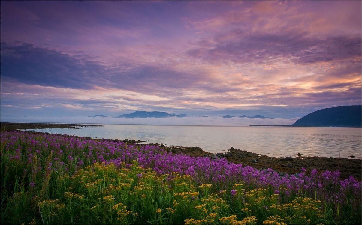 Картинка закат, река, берег, цветы, пейзаж на рабочий стол. Скачать фото обои пейзажи