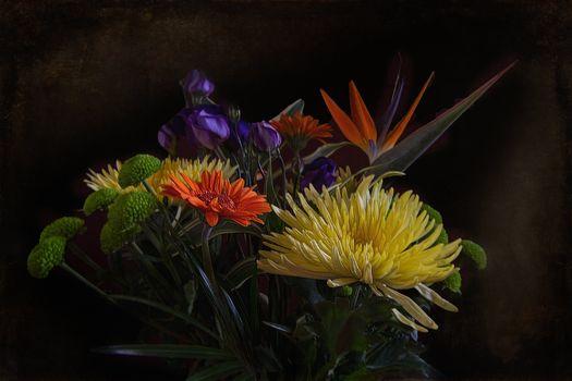Фото бесплатно цветочная композиция, букет, флора
