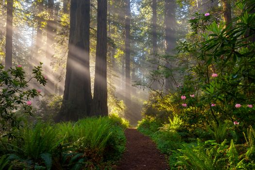 Photo free landscape, nature, bushes