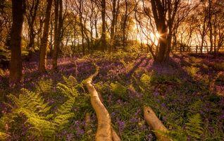 Бесплатные фото закат,лес,деревья,холм,цветы,природа