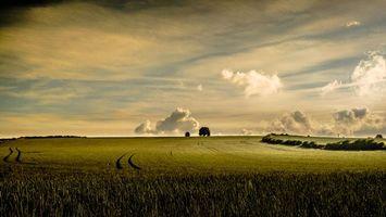 Фото на телефон поле, закат
